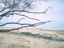 Coucher du soleil coloré de l'atmosphère romantique en mer Plage pierreuse avec le tronc cassé photographie stock