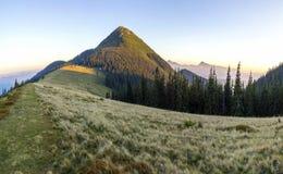 Coucher du soleil crémeux doux en montagnes carpathiennes Engazonnez le pré couvert, les pins et les crêtes de montagne éloignées images libres de droits
