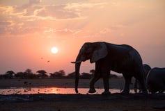 Coucher du soleil d'éléphants Image libre de droits