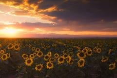 Coucher du soleil d'été Photos libres de droits