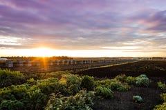 Coucher du soleil d'été au-dessus de ferme et de caisses en bois pour des oignons Images libres de droits