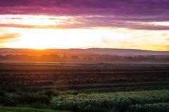 Coucher du soleil d'été au-dessus de vallée de ferme pendant la récolte maximale Photos libres de droits