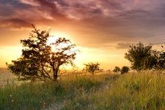 Coucher du soleil d'été au-dessus du pré avec de petits arbres Photos stock