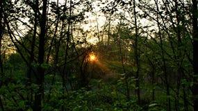 Coucher du soleil d'été en Pologne image stock