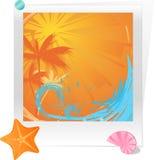 coucher du soleil d'étoiles de mer de seashell de paume d'océan Image stock