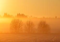 Coucher du soleil d'or Photos libres de droits