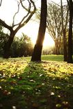 Coucher du soleil d'or images libres de droits