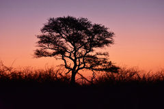 Coucher du soleil d'acacia Image libre de droits