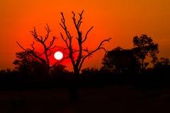 Coucher du soleil d'Afrique Photo libre de droits