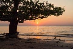 Coucher du soleil d'Amazone Photographie stock libre de droits