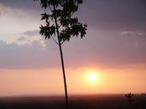 Coucher du soleil d'arbre Image libre de droits
