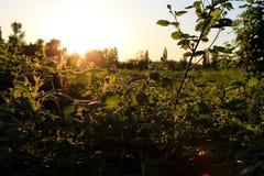 Coucher du soleil 004 d'arbre Image libre de droits