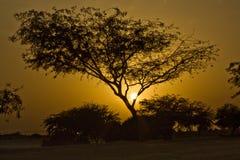 Coucher du soleil d'arbre Photographie stock