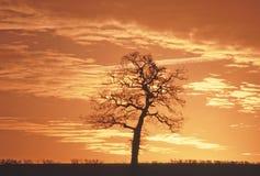Coucher du soleil d'arbre Images libres de droits