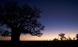 Coucher du soleil d'arbre de Boab Photo stock
