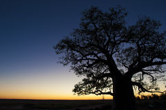 Coucher du soleil d'arbre de Boab Image stock