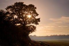 Coucher du soleil d'arbre de chêne Photos stock
