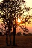Coucher du soleil d'arbre de la Thaïlande Images libres de droits