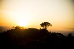 Coucher du soleil d'arbre de sagesse image stock
