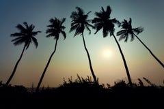 Coucher du soleil d'arbres de noix de coco Photographie stock