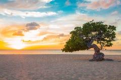 Coucher du soleil d'Aruba Divi Divi Tree Photos libres de droits