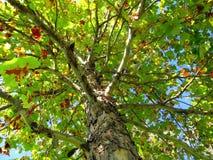 Coucher du soleil d'automne photos stock