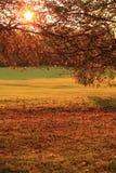 Coucher du soleil d'automne en stationnement Photo stock