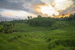 Coucher du soleil d'or chez Jatiluwih Bali photo stock