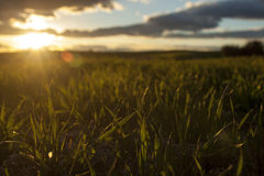 Coucher du soleil d'herbe Photographie stock
