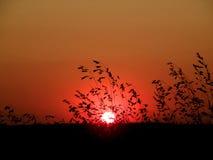 Coucher du soleil d'herbe sauvage photographie stock libre de droits