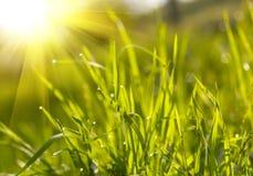 Coucher du soleil d'herbe verte Photo stock