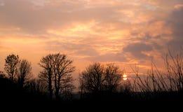 Coucher du soleil d'hiver derrière les arbres Photographie stock libre de droits