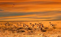 coucher du soleil d'impala photographie stock