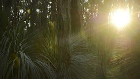 Coucher du soleil d'insectes Photo libre de droits