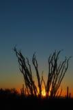 Coucher du soleil d'Ocotillo Photographie stock libre de droits
