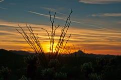 Coucher du soleil d'Ocotillo images libres de droits