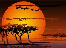 Coucher du soleil d'un soleil Photo stock
