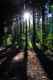 Coucher du soleil dans bois. Photos libres de droits