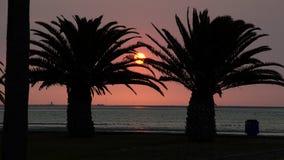 Coucher du soleil dans des paumes image libre de droits