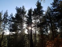 Coucher du soleil dans l'arbre forestier image libre de droits