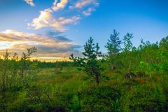 Coucher du soleil dans la forêt Photographie stock