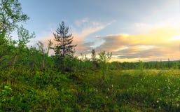 Coucher du soleil dans la forêt Photos stock