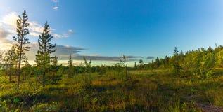 Coucher du soleil dans la forêt Photo libre de droits