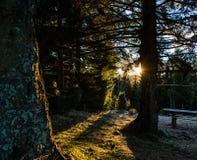 Coucher du soleil dans la forêt Images libres de droits
