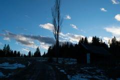 Coucher du soleil dans la forêt Image libre de droits