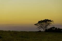 Coucher du soleil dans la forêt Photos libres de droits