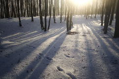 Coucher du soleil dans la forêt congelée en hiver Photos libres de droits