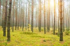 Coucher du soleil dans la forêt d'automne images stock
