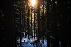 Coucher du soleil dans la forêt neigeuse Photos libres de droits