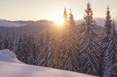 Coucher du soleil dans la haute de forêt d'hiver dans les montagnes Paysage backcountry stupéfiant de soirée photo stock